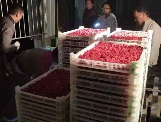 甘肅省張掖市山丹縣 樹莓果