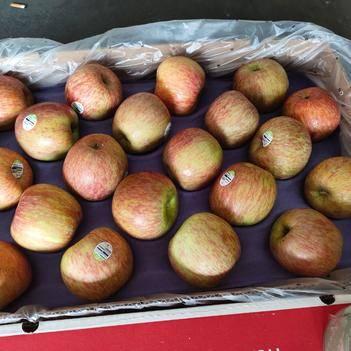 美國蜜脆蘋果 50箱批發。
