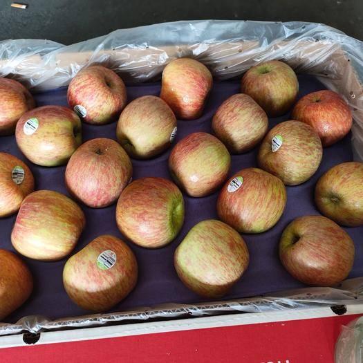 上海市奉賢區美國蜜脆蘋果 50箱批發。