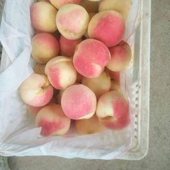 水蜜桃,新世紀閃亮登場,個大味美,純肉質型桃子