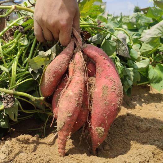 福建六鰲地瓜沙地西瓜紅紅蜜薯5斤裝散裝粉糯香甜