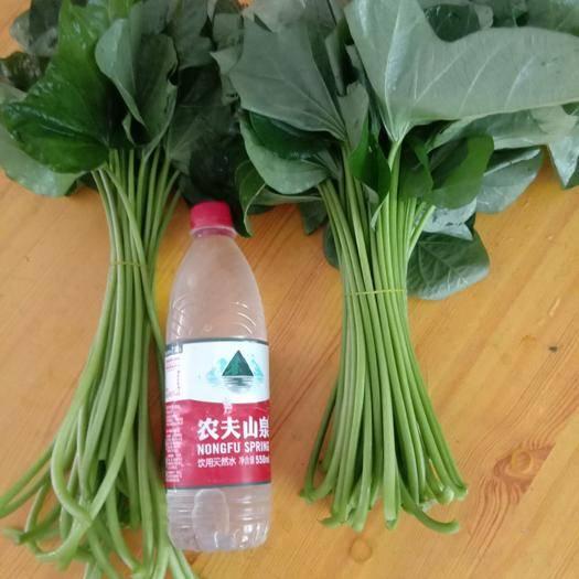 安徽省亳州市利辛縣紅薯梗 一級蔬菜