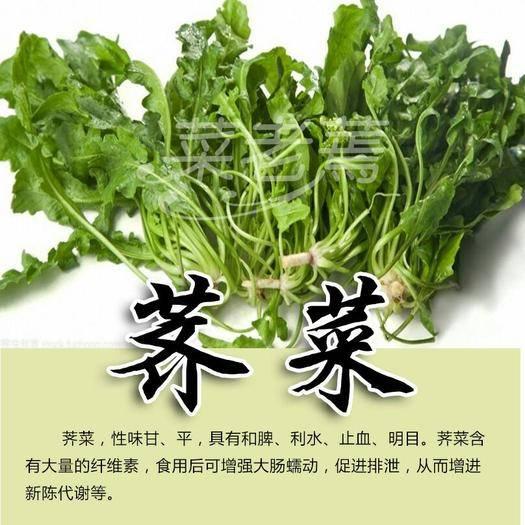 河北省滄州市運河區 河北琛青公司銷售速凍薺菜,脫水薺菜,香菇馬齒筧萬年青灰灰菜
