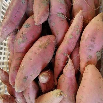 煙薯25 精品 3至6兩糖分高流油無絲 軟糯香甜 烤薯店 電商中果
