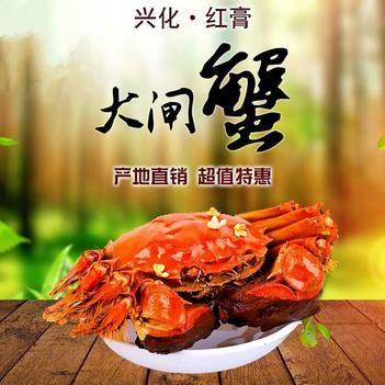 ??精品兴化红膏大闸蟹,基地直供,馈赠佳品,支持一件代发!