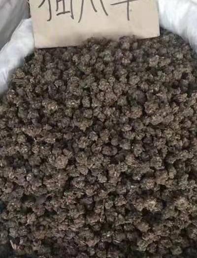 广西壮族自治区玉林市玉州区 猫爪草