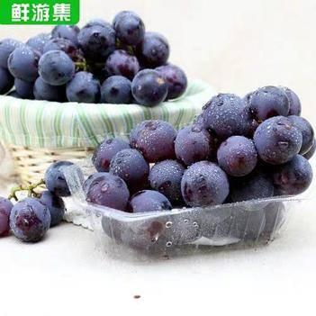山西运城现摘夏黑葡萄水果当季新鲜巨峰黑提子酸甜多汁饱满