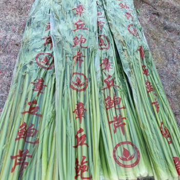 章丘鮑芹 酒店專用 眾農蔬菜種植合作社