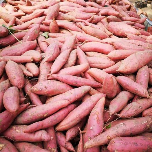 河南省开封市祥符区春红薯 供应西瓜红。龙九鲜货。