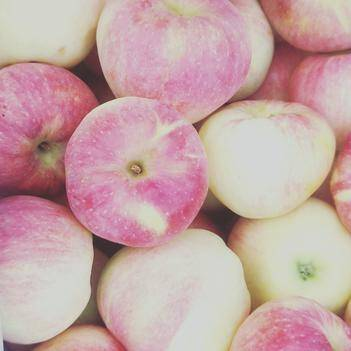 美八蘋果,個大色好有要的聯系我
