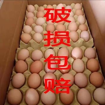 普通鸡蛋 常年大量供应,破损包赔,直接来电