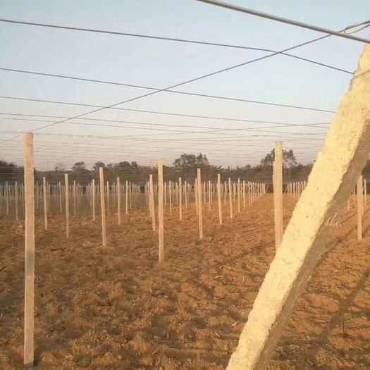 廣西壯族自治區桂林市興安縣農技人員 專業搭建百香果,獼猴桃八月瓜,葡萄避雨棚