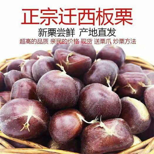 河南省信陽市平橋區信陽板栗 信陽油栗農戶家便宜出售