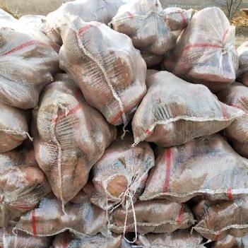 龍薯九號 大量供應龍薯九大頭聯系