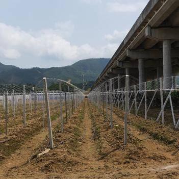 農技人員 專業承接葡萄百香果火龍果獼猴桃和各類溫室大棚