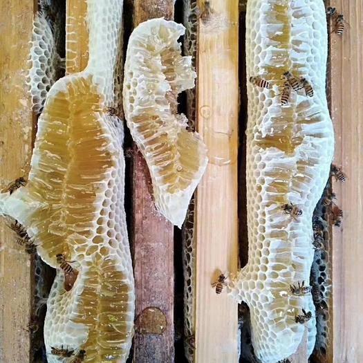 福建省龙岩市永定区 农家中蜂蜜