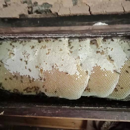 湖南省株洲市炎陵县 土蜂蜜  纯天然无污染蜂蜜  深山老林蜂蜜,一年只割一次