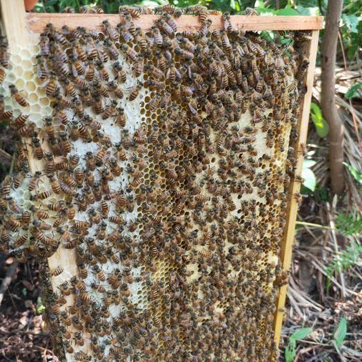 湖南省常德市石门县 来自湖南屋脊壶瓶山国家自然保护区大山深深处的原生态土蜂蜜