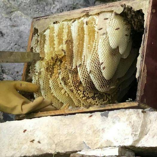 重庆市石柱土家族自治县土蜂蜜 塑料瓶装 2年以上 100%