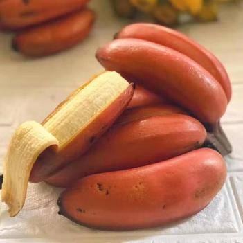 福建紅美人香蕉5斤包郵