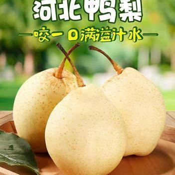 梨子鸭梨净重5斤包邮水果新鲜雪梨皇冠梨库尔勒香梨水晶梨秋月梨