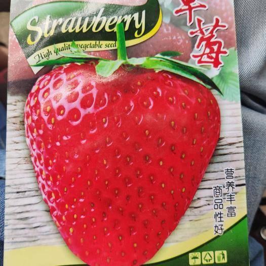 河南省商丘市夏邑縣 草莓種子