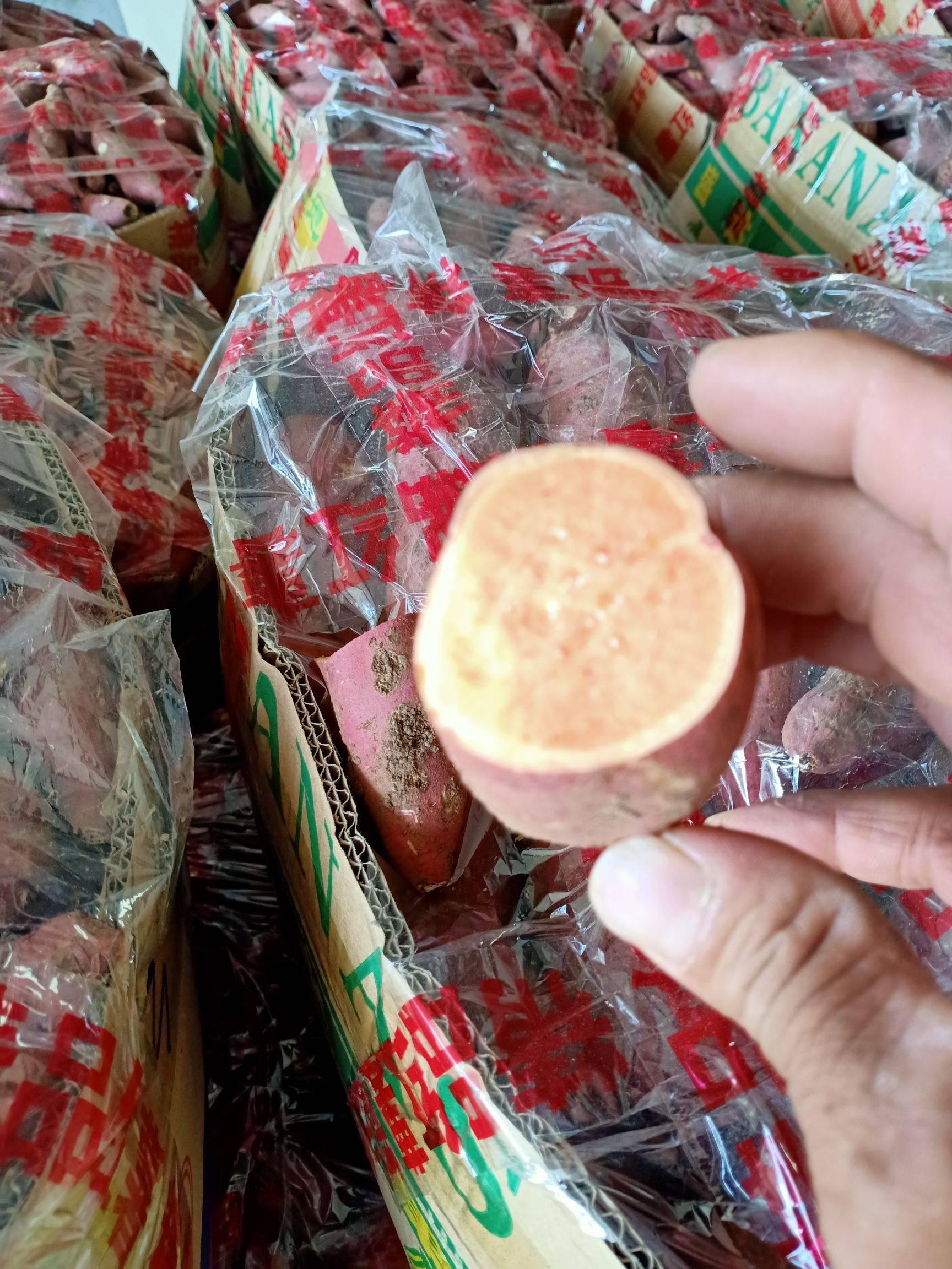 [西瓜红批发] 明光市自来桥镇西瓜红苏八红薯大量上市了,口感好吃,品质好,价格1.4元/斤