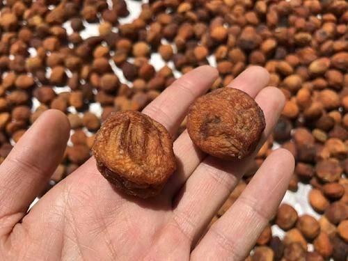 新疆維吾爾自治區伊犁哈薩克自治州伊寧縣 新疆吊干杏
