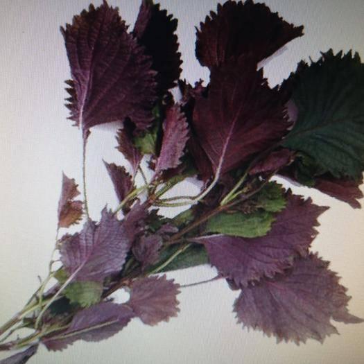 陜西省安康市嵐皋縣野生紫蘇 來自國家貧困山區最好的食用藥物