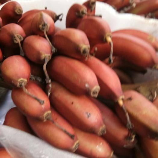 廣西壯族自治區南寧市西鄉塘區 紅蕉美人蕉