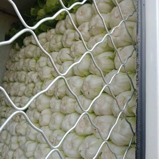 辽宁省锦州市凌海市半黄心菜 3~6斤 净菜