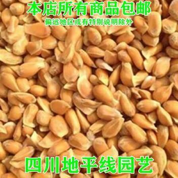 香橼种子新种包邮