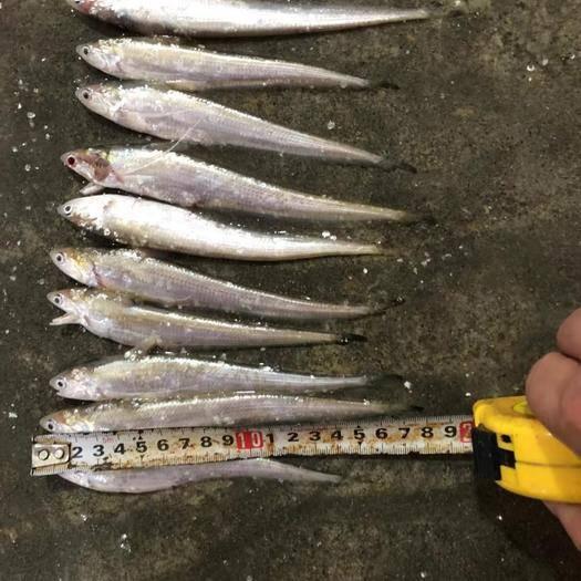 安徽省蚌埠市懷遠縣江刀魚