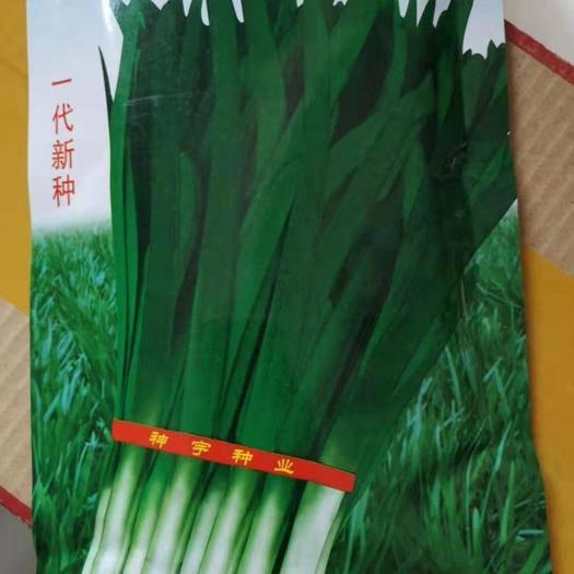 河南省商丘市夏邑县 神松9号韭菜种子 200克