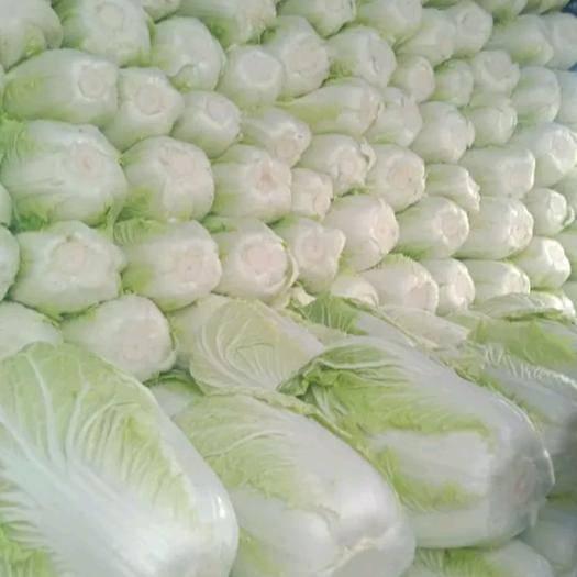 宁夏回族自治区固原市西吉县黄心大白菜 3~6斤 净菜
