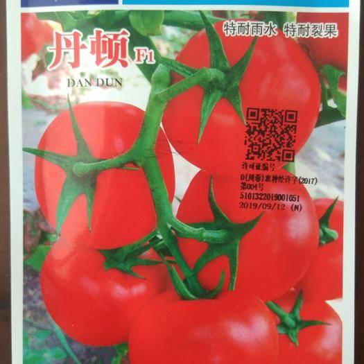 四川省绵阳市涪城区丹顿石头番茄种子 高端大红进口石头番茄种子
