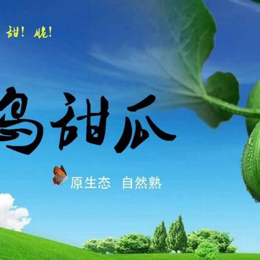 陕西省咸阳市秦都区 甜瓜、吊蔓甜瓜、绿宝、绿宝甜瓜;原生态自然熟;绿岛甜瓜