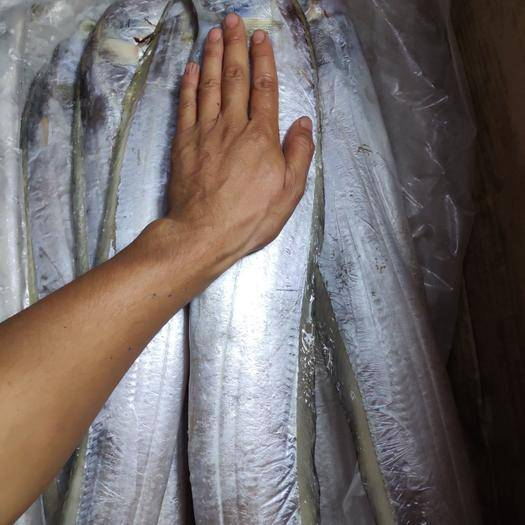广西壮族自治区北海市海城区 带鱼700/1000g