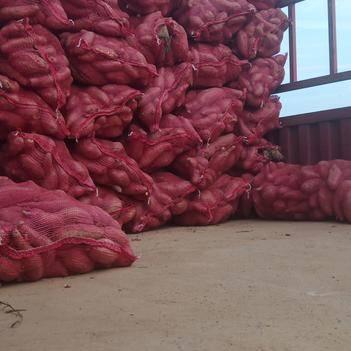 水果山药 20~30cm