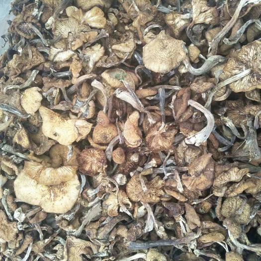 黑龙江省哈尔滨市五常市 东北野生头茬榛蘑干货1斤装80元全国包邮