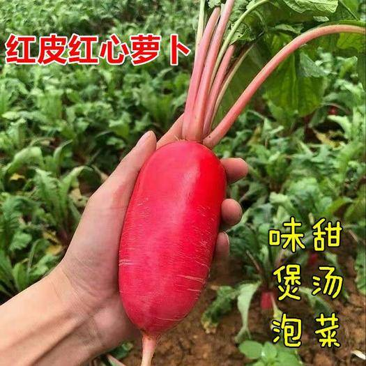 江西省宜春市樟树市 红心红皮水果萝卜种子味略甜 做泡菜 煮熟 盐渍 吃法多样