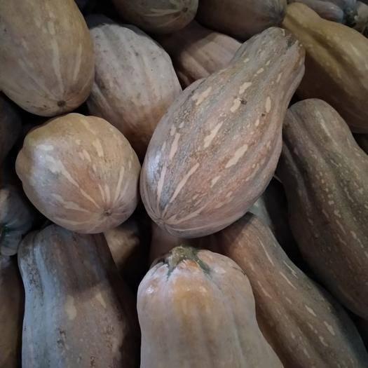 四川省南充市阆中市板栗南瓜 自家种植,纯绿色食品,欢迎订购