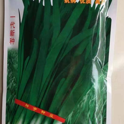 河南省商丘市夏邑县 绿冠韭菜种子 抗病 优质 高产