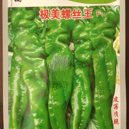 四川省绵阳市涪城区 杂交螺丝椒种子
