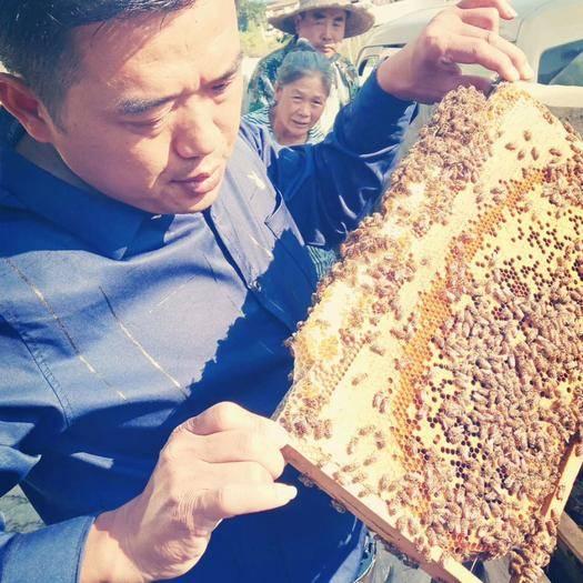 贵州省黔东南苗族侗族自治州岑巩县 贵州高原蜂蜜