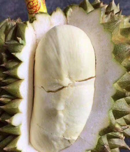 广西壮族自治区崇左市凭祥市 泰国巴掌榴莲,价格链接,死包生包坏果可以包赔,其他不包。