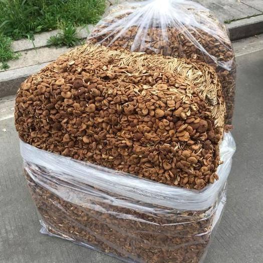 福建省宁德市古田县 农家特产干货新鲜古田茶树菇  无硫茶树菇