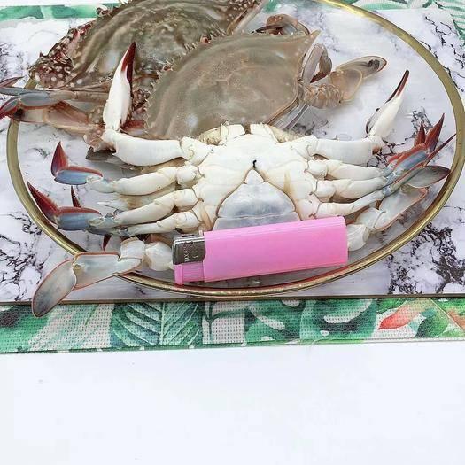 江苏省苏州市太仓市 母蟹野生梭子蟹母蟹个大有黄新捕活冻5斤