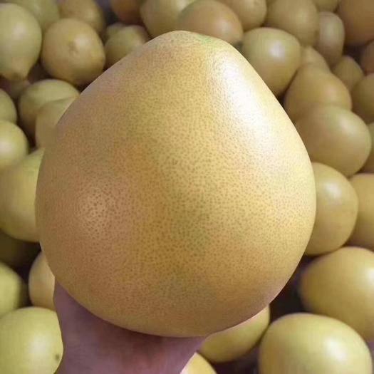 福建省漳州市平和县 柚子是秋冬季节最好的,滋润、美容养颜、瘦身水果。