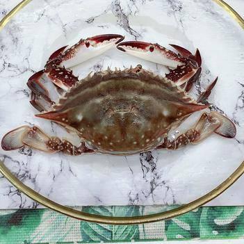 二母蟹小娘蟹野生梭子蟹小母蟹肉質緊實10斤裝